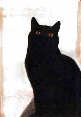 Panther The British Shorthair Cat Poster