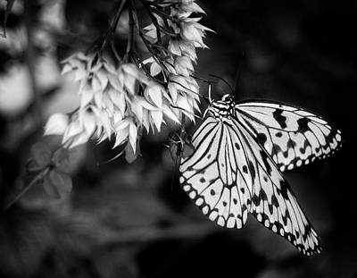Paper Kite In Black And White Poster