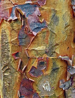 Paperbark Maple   Poster