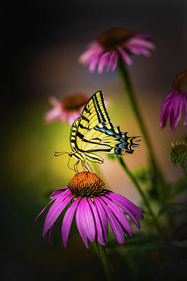 Papilio Poster by Jeffrey Jensen