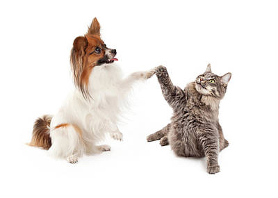 Papillon Dog And Cat High Five Poster