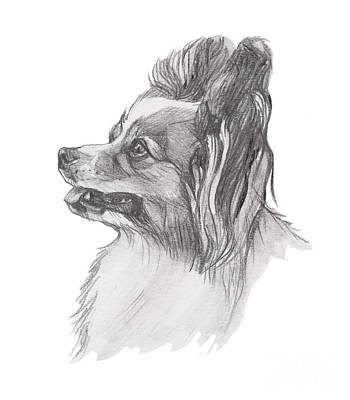 Papillon Dog Charcoal Drawing Poster