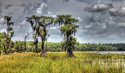 Parade Of Cypress Trees Poster