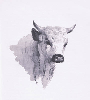 Park Cattle Poster by Archibald Thorburn