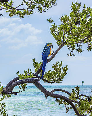 Parrot Above The Aqua Sea Poster by Paula Porterfield-Izzo