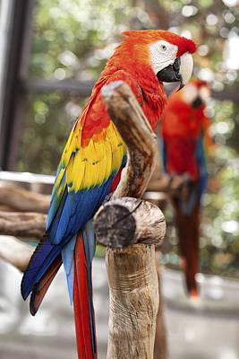 Parrot Colors Poster