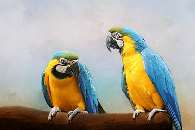 Parrot Poster by Heike Hultsch