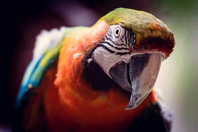 Parrot Selfie Poster