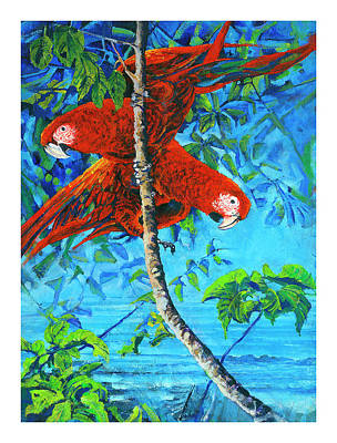 Parrots In Canopy Above Poster