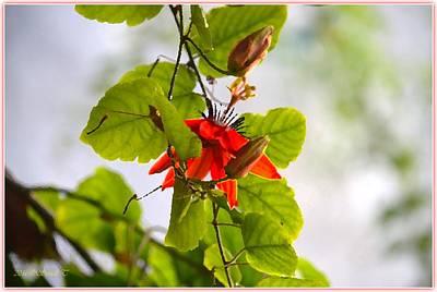 Passiflora Vine Poster
