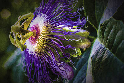 Passion Flower Profile Poster by Barry Jones