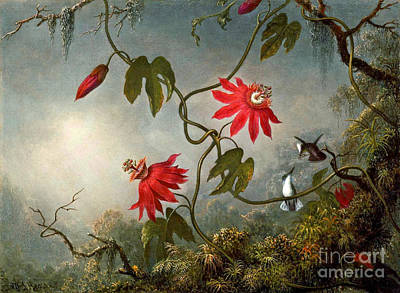 Passion Flowers And Hummingbirds 1870 Poster