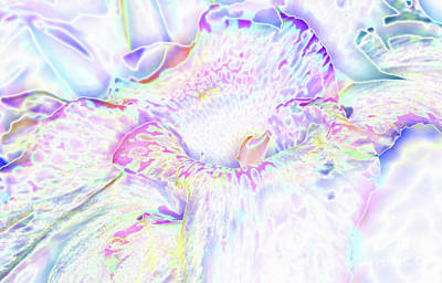 Pastel Cascade Poster by Carol Lloyd