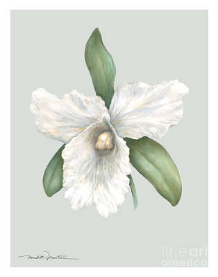 Pastel Orchid Poster by Meridith Martens