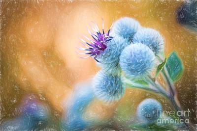 Pastel Painting Flower - Flowering Great Burdock Poster by Lubos Chlubny