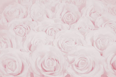 Pastel Pink Roses Poster by Lucid Mood