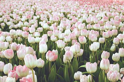 Pastel Pink Tulips- Art By Linda Woods Poster