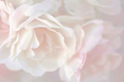 Pastel Rose Flowers Poster
