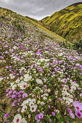 Pastel Super Bloom Poster