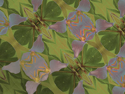 Pastel Triliium Poster by Jean Noren