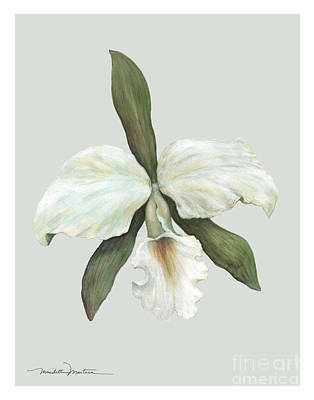 Pastel Trumpet Orchid Poster by Meridith Martens