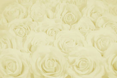 Pastel Yellow Roses Poster by Lucid Mood