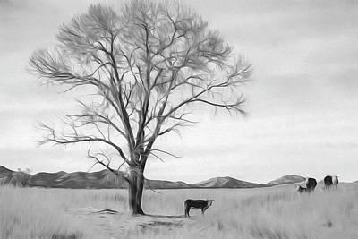 Patagonia Pasture Bw Poster