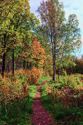 path in a beautiful country Park on a Sunny autumn day Poster