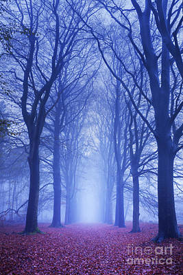 Path In A Dark And Foggy Forest In The Netherlands Poster by Sara Winter