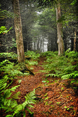 Path In The Ferns Poster