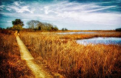 Path Through The Coastal Marshes Poster