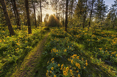 Path To The Golden Light Poster by Mark Kiver