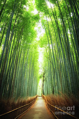 Pathway Through The Bamboo Grove Kyoto Poster by Jane Rix