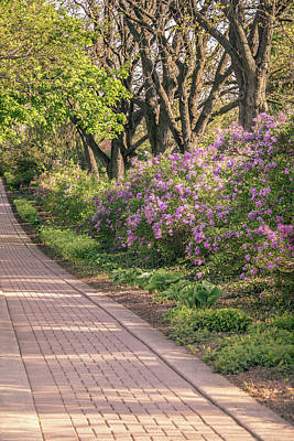 Pathway To Beauty In Lombard Poster