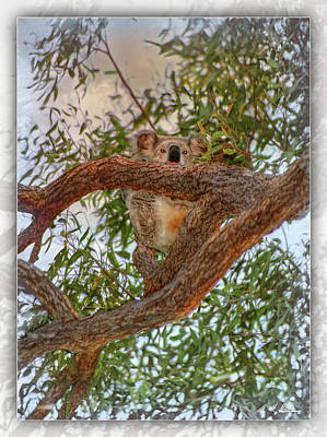 Poster featuring the photograph Patience Brings Koalas by Hanny Heim
