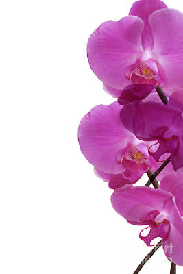 Pattern Of Orchids Poster