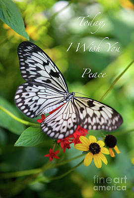 Peaceful Butterfly Card Or Poster Poster by Carol Groenen