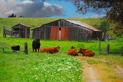 Peaceful Cows Poster by Harry Spitz