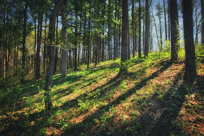 Peaceful Forest 4 - Spring At Retzer Nature Center Poster by Jennifer Rondinelli Reilly - Fine Art Photography