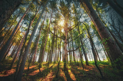 Peaceful Forest 5 - Spring At Retzer Nature Center Poster by Jennifer Rondinelli Reilly - Fine Art Photography