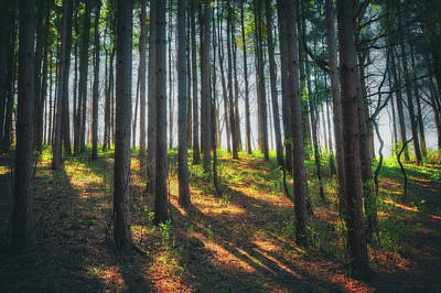 Peaceful Forest - Spring At Retzer Nature Center Poster by Jennifer Rondinelli Reilly - Fine Art Photography