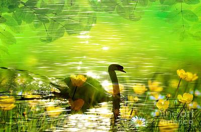 Peaceful Swan In Lake With Flowers Poster