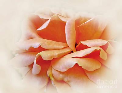 Peach Delight Poster
