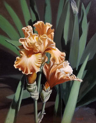 Peach Iris Poster