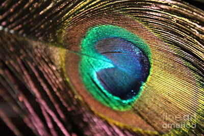 Poster featuring the photograph Peacock Feather by Terri Thompson
