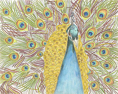 Poster featuring the drawing Peacock One by Arlene Crafton