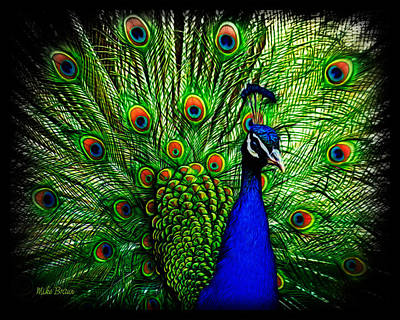 Peacock Paradise Poster