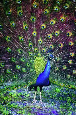 Peacock Series 9801 Poster