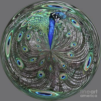 Peacock Swirl #2 Poster