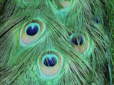 Peacock Tail Poster by Martina Fagan